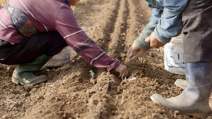 Farmers plant seeds in California's Central Valley